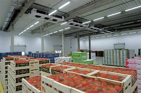 Склади для зберігання овочів та фруктів
